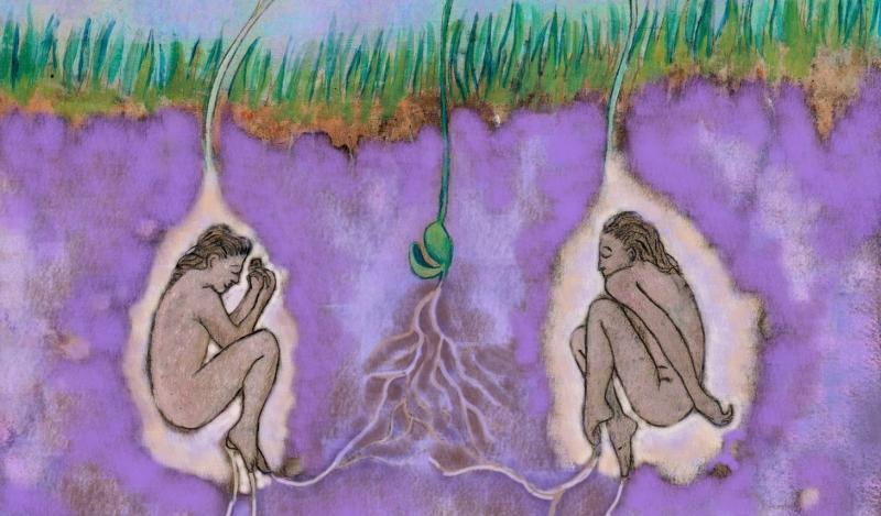 Dettaglio dell'illustrazione di Renata Otfinowska